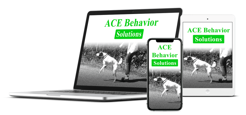 Behavior Solutions Bundle