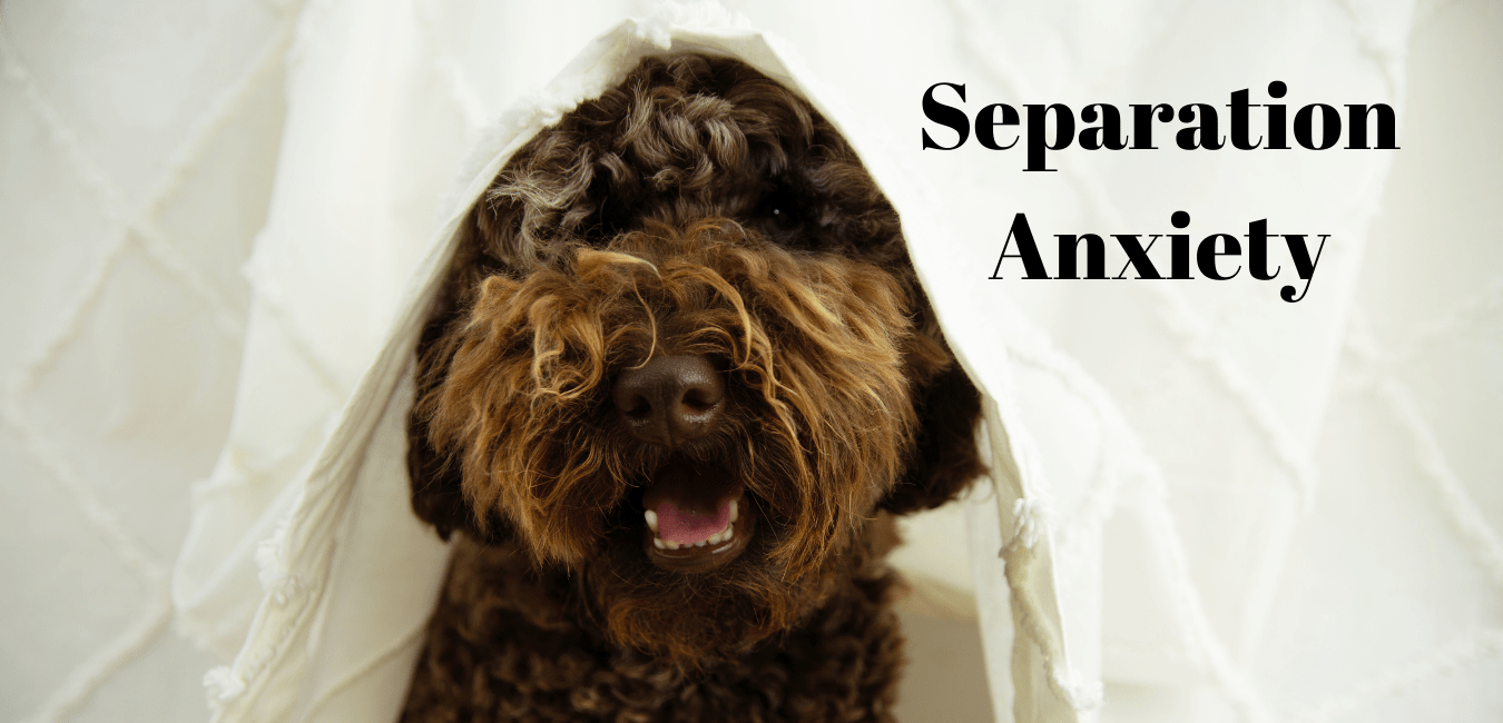 Separation Anxiety Dog Training