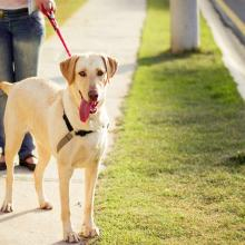 Little Known Ways To Make The Most Out Of Dog Leash Training