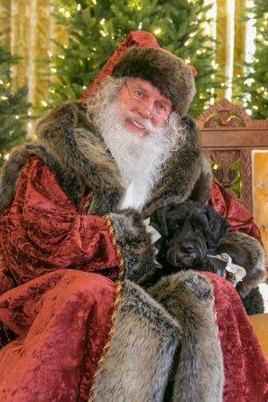 Victor with Santa Christmas photo www.dogtrotting.net