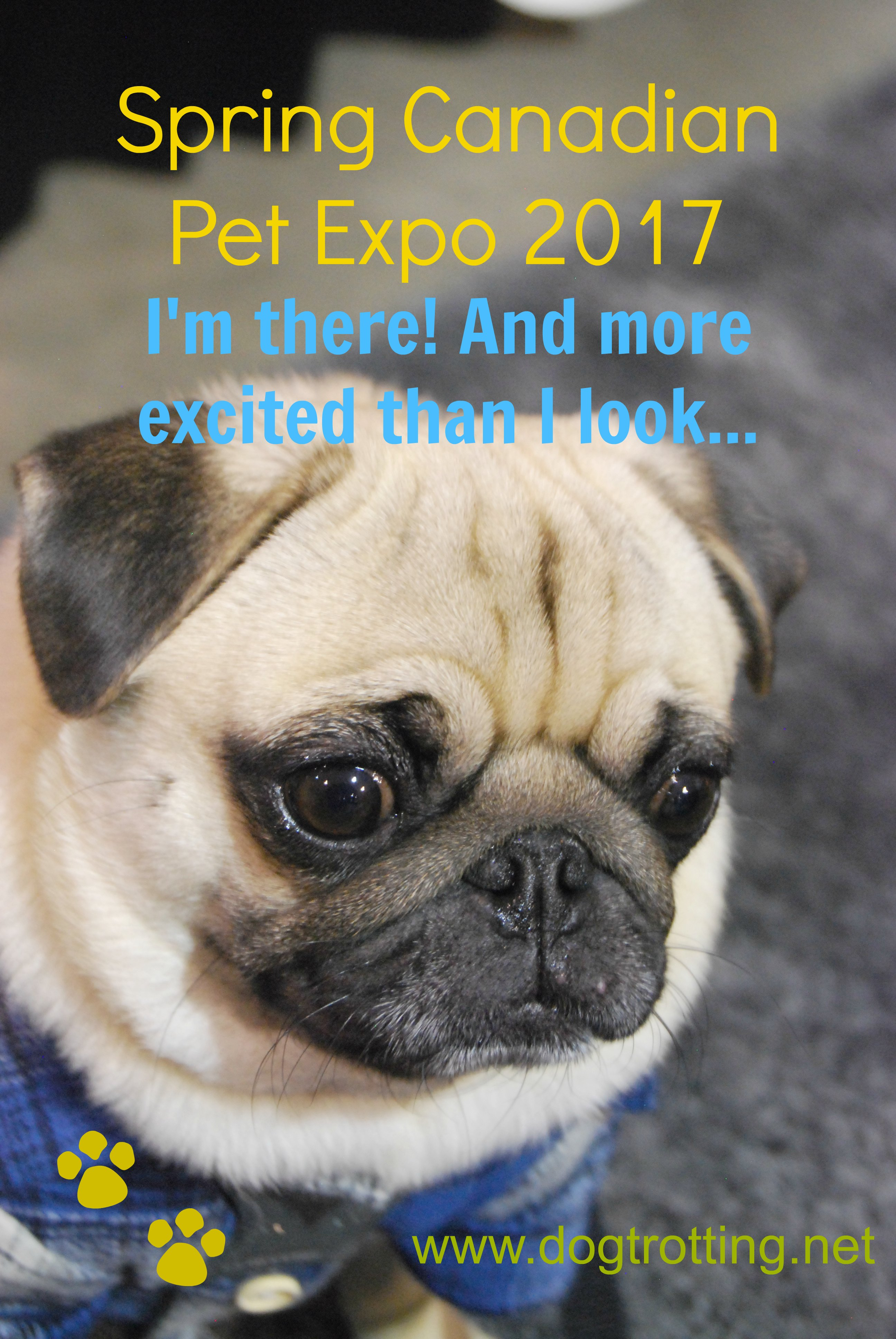 Travel Toronto, ON: Spring 2017 Canadian Pet Expo. It's on!