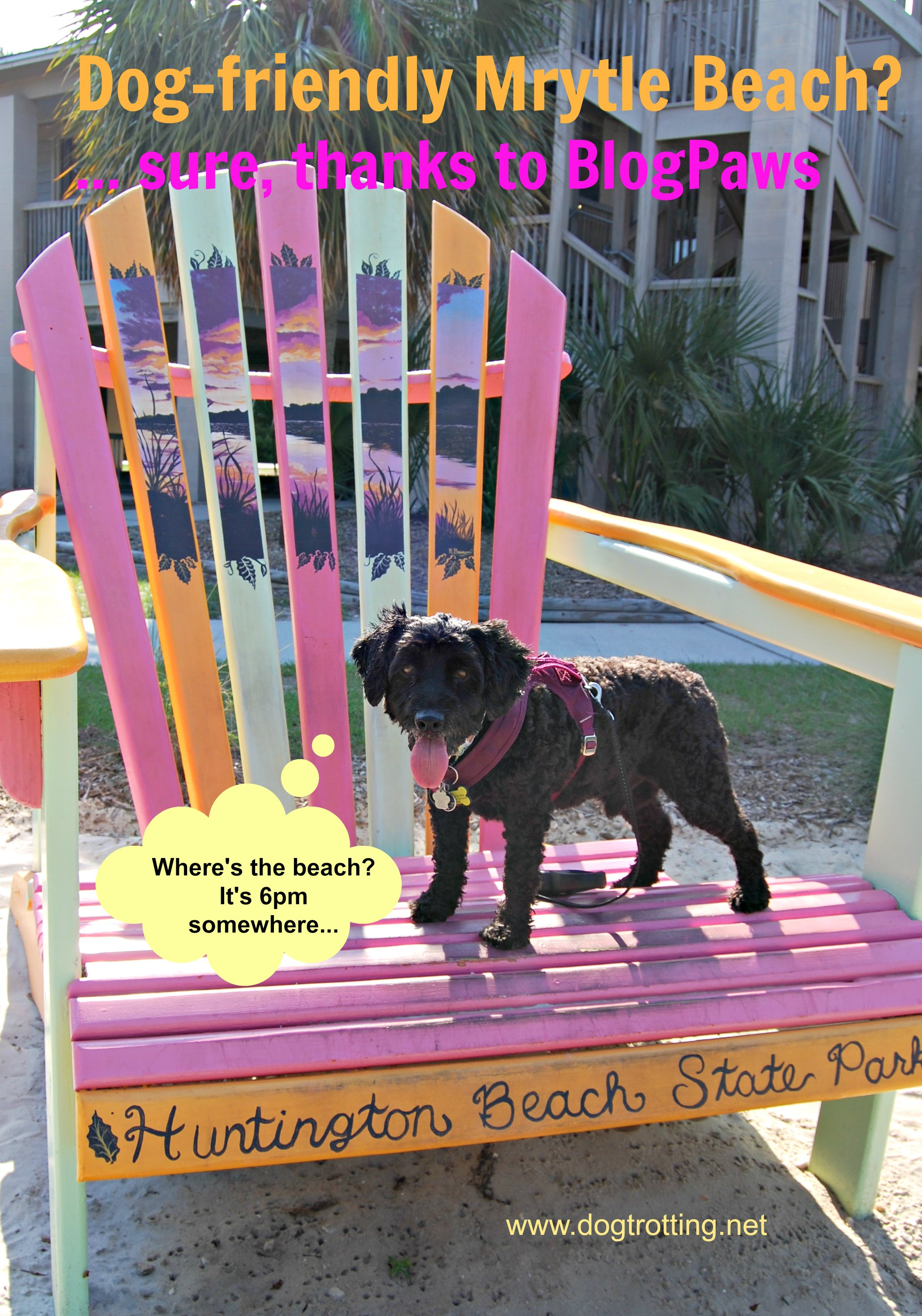 Travel Myrtle Beach, SC: Taking the dog? Here's what you need to know (and more)