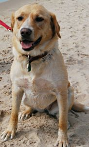 Posing on the Dog Beach at Whitefish Dunes State Park