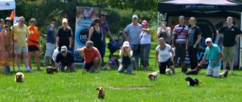 Dachshund dog races at Wienerpawlooza 2015