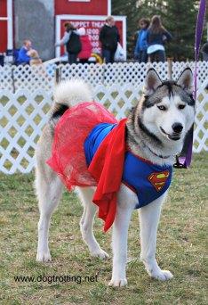 dog in super girl costume