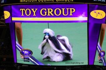 toy winner