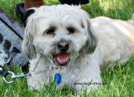 woofstock dog www.dogtrotting.net