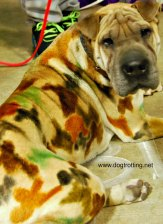 kit pet expo dog groom