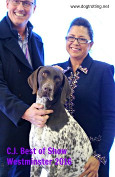 CJ Westminster Dog Show 2016 Best in Show
