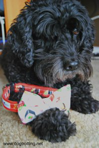 Dog with bow tie from Peachy Keen Accessories