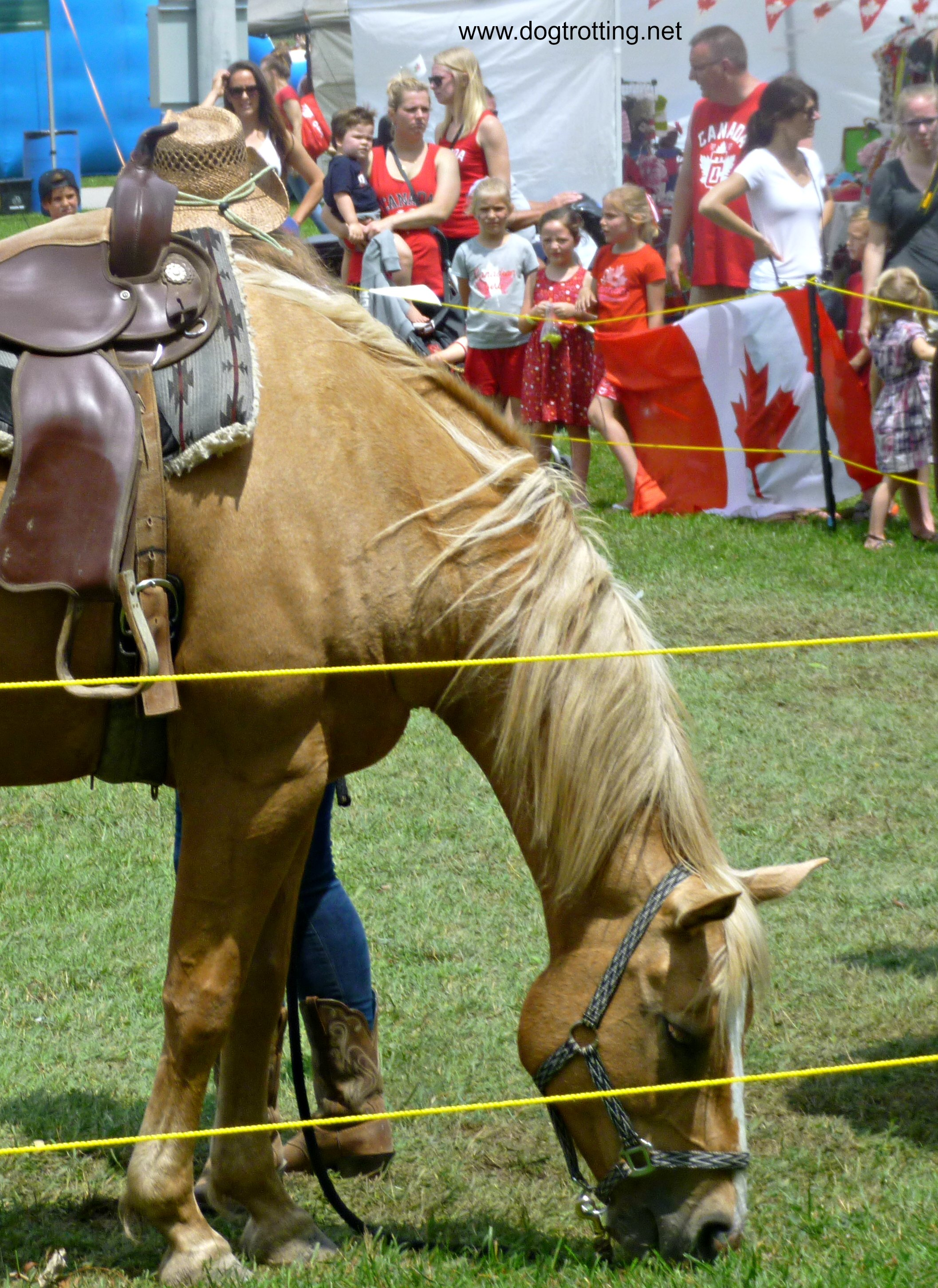 Horse at Caledonia Canada Day 150 Festival