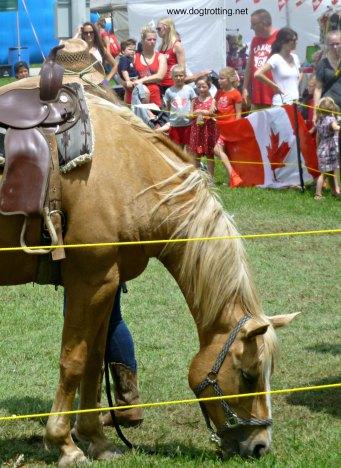 Horse at Caledonia Canada Day 150 Festival