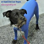 Shed Defender, long johns for dogs, SuperZoo Product dogtrotting.net