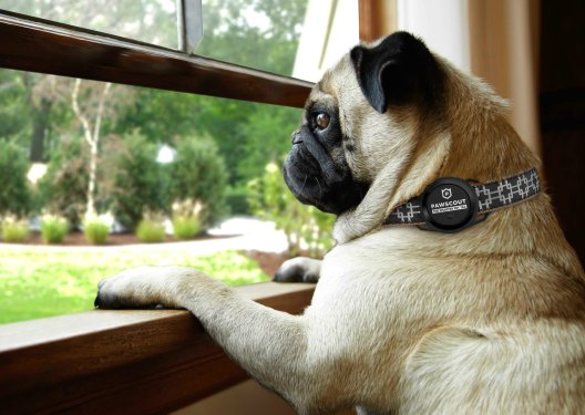 Pub looking out window wearing Pawscout collar technology