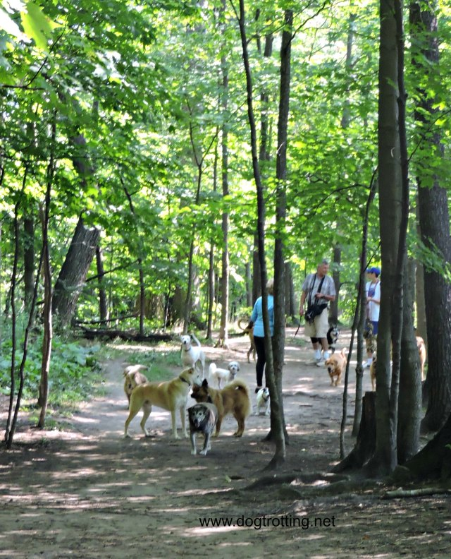Bronte Creek Provincial Park Dog Hiking Trail