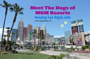 Las Vegas, dogtrotting.net
