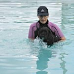 Victor swimming at K9 Fun Zone dogtrotting.net