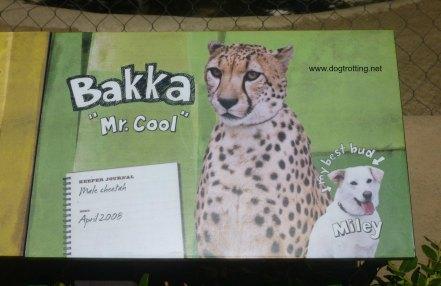 san diego dog and cheetah 1