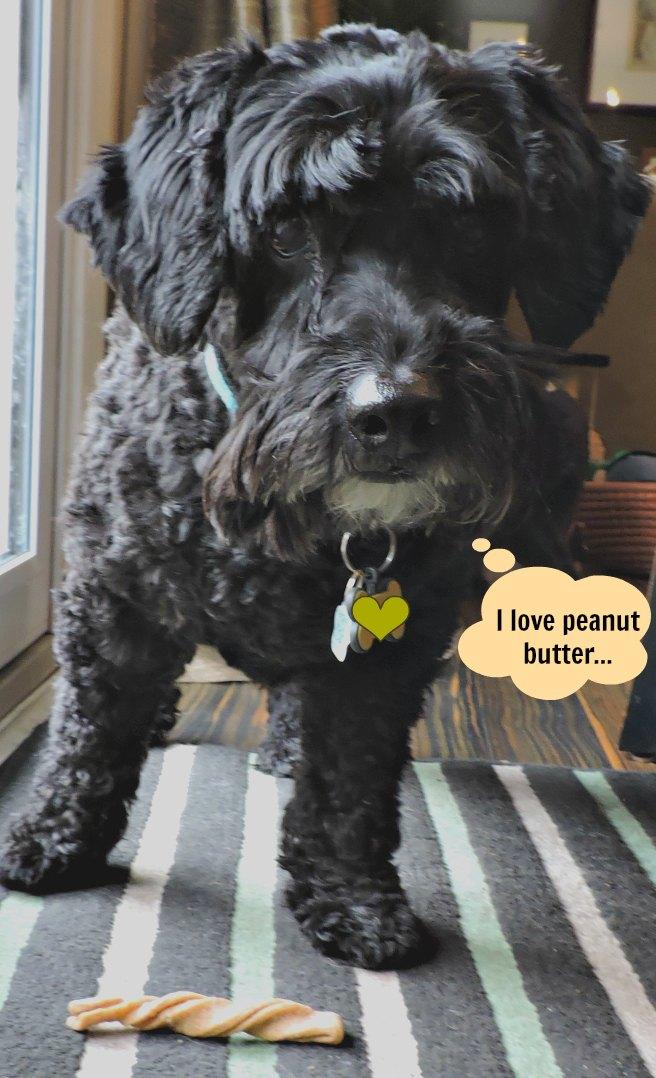 dog eating peanut butter treat