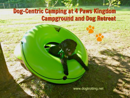 dog camping site