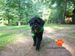 dog camping trail