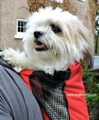 dog in K9 Sport Sack review on dogtrotting.net