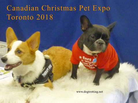 two small dogs at Canadian Christmas Pet Expo dogtrotting.net