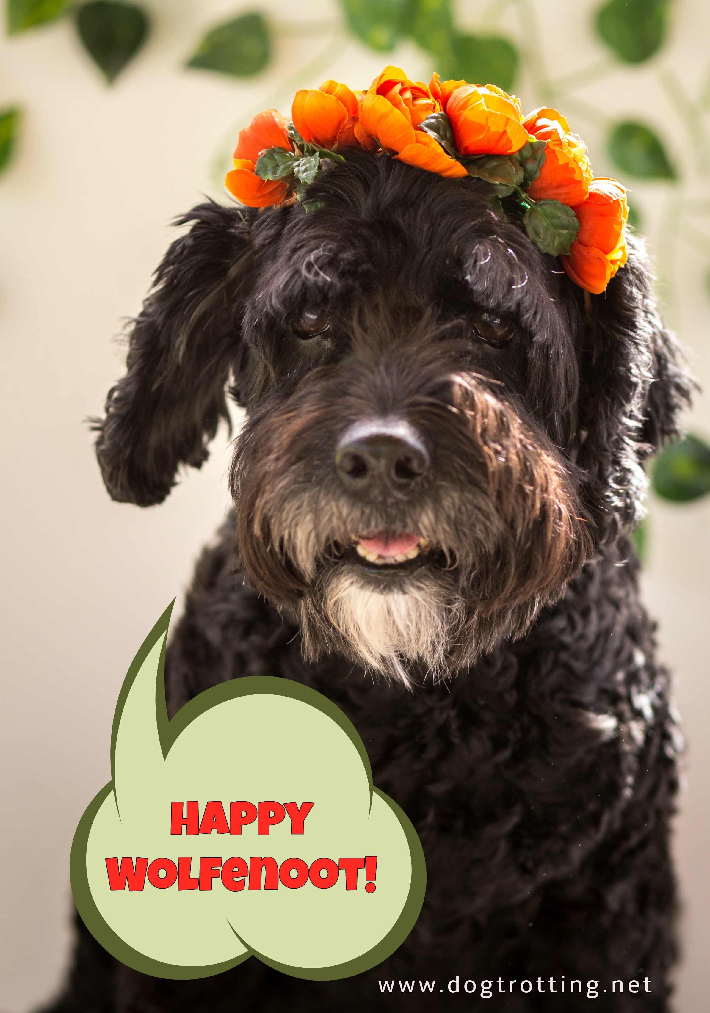 black dog with orange flowers