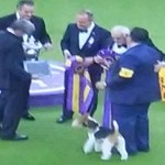 Best of Show Westminster