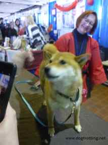 dog at AKC Meet the Breeds