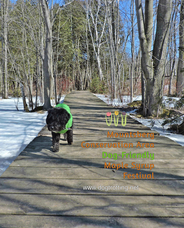 Dog at Mountsberg Conservation Area, Campbellville Ontario