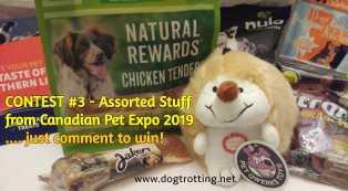 contest #3 dogtrotting.net