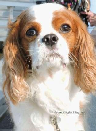 dog at Dog Bowl 2019 Frankenmuth, Michigan