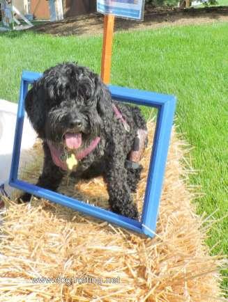 dog at selfie station at Dog Bowl 2019 Frankenmuth, Michigan