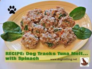 dog treat recipe tuna melt dogtrotting.net