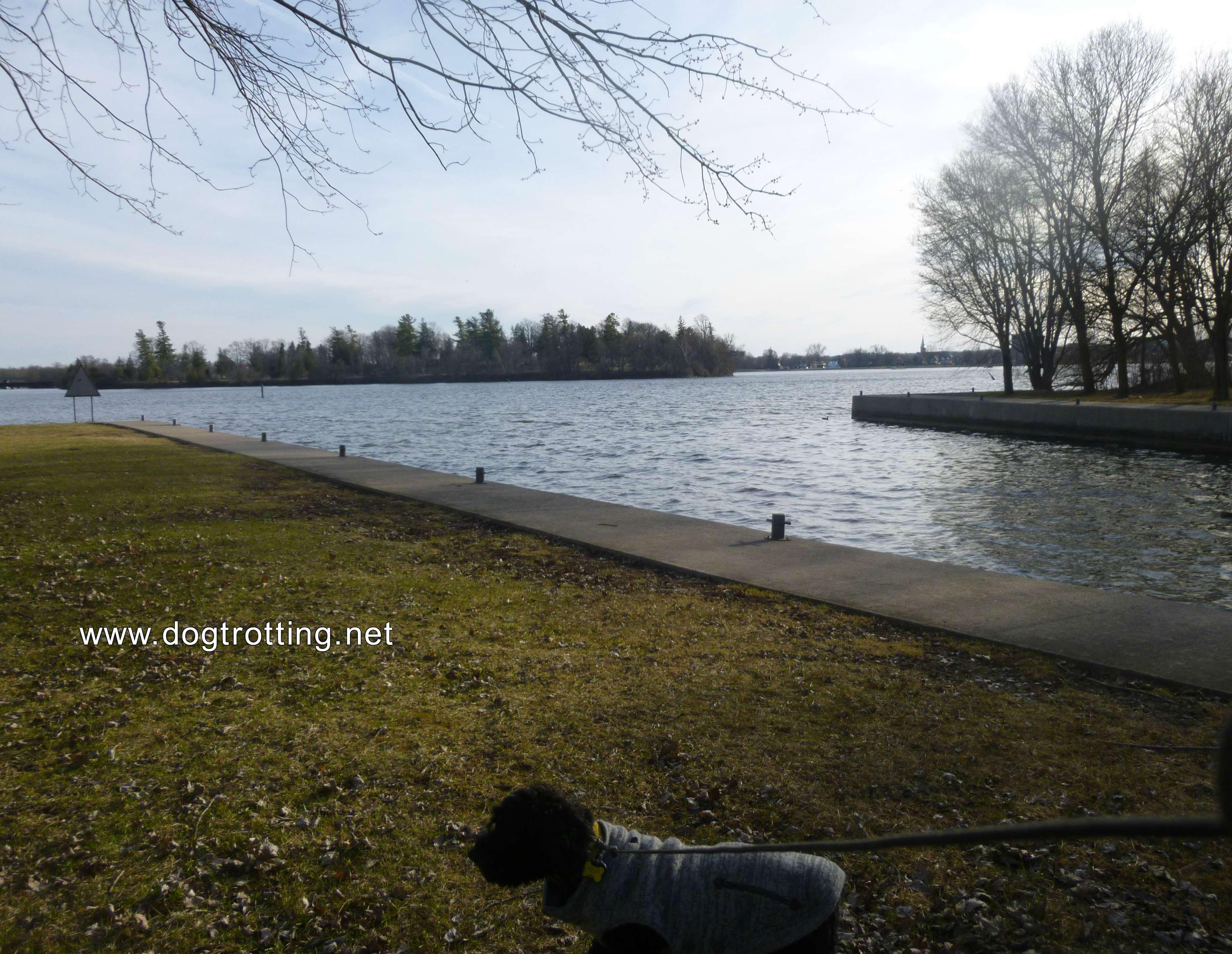 Dog at Beavermead Park, Peterborough, Ontario
