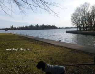 Dog at Beavermead Park, Peterborough, Ontario