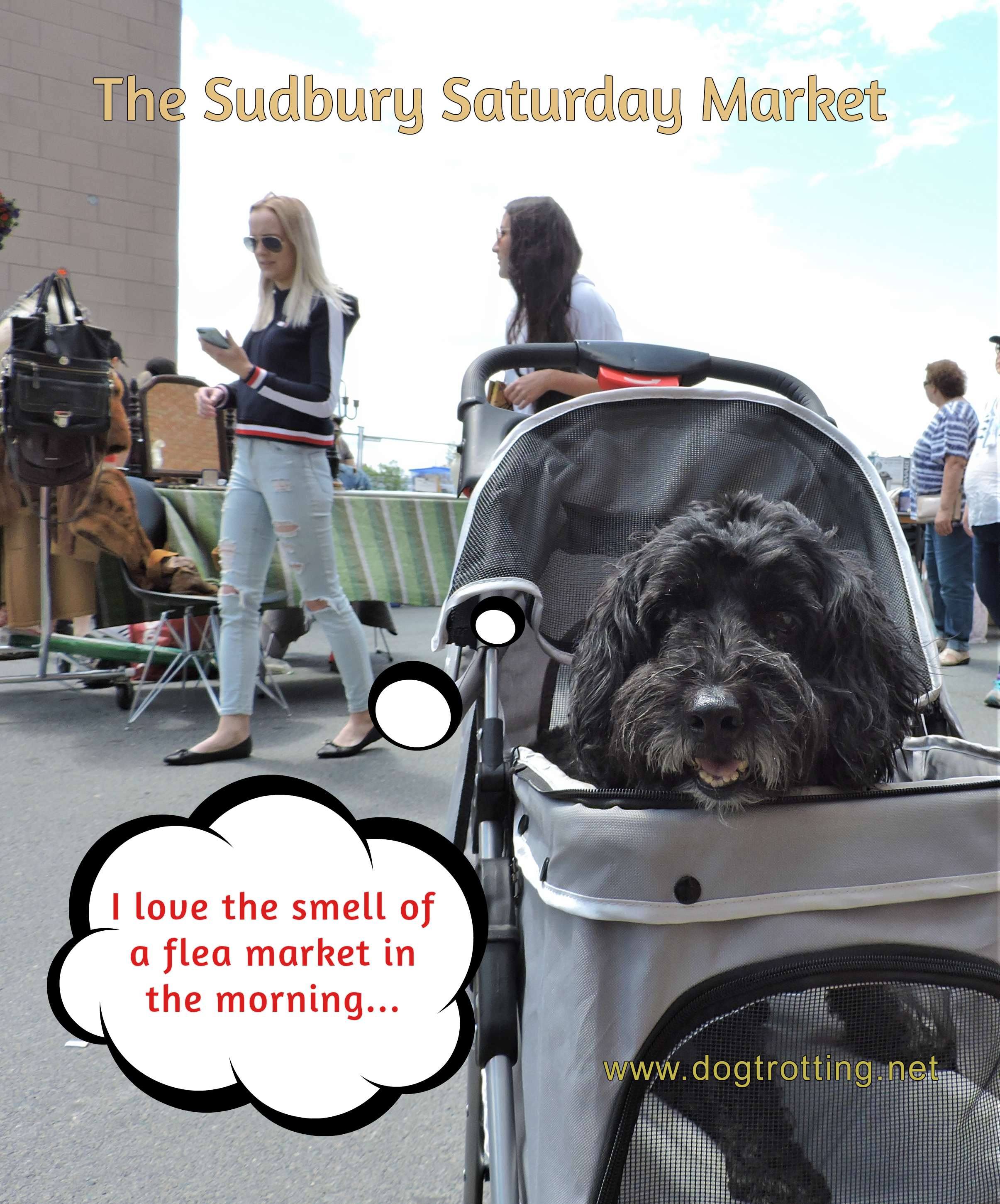 dog at Sudbury Ontario Saturday Market