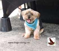 small dog at Carp Farmers' Market