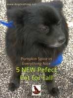 little fluffy black dog