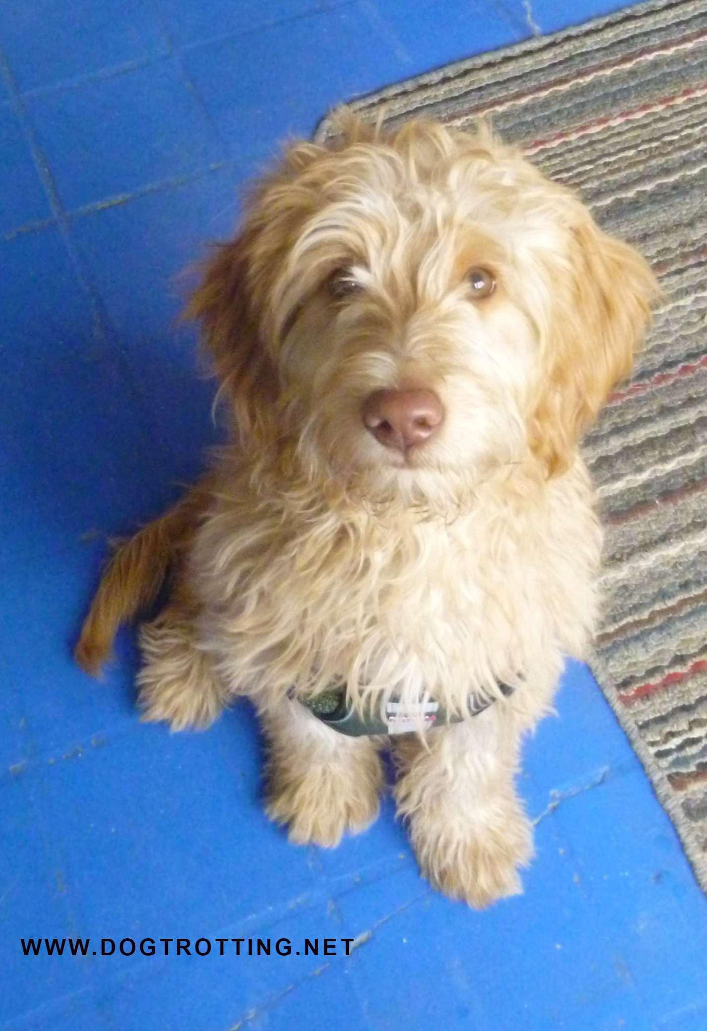 cute beigh shaggy dog at My Dog's Cafe in Hamilton, Ontario
