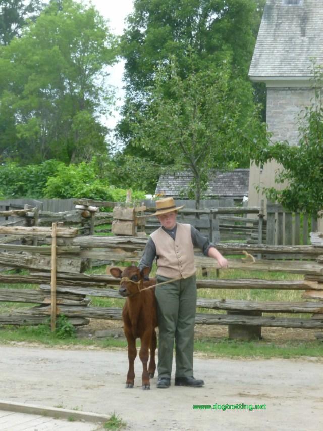 Calf and handler at dog-friendly Upper Canada Village