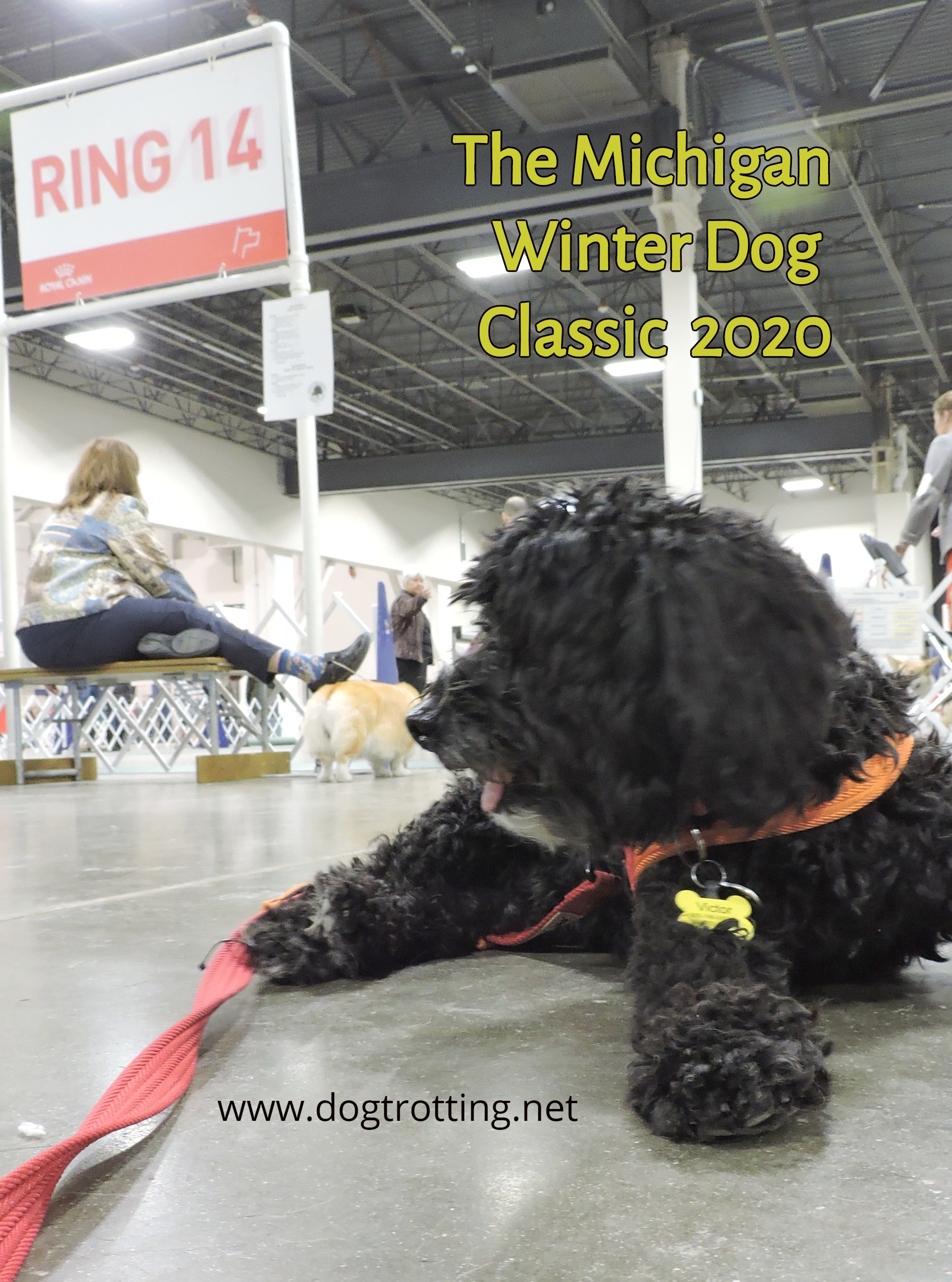 black dog at The Michigan Winter Dog Classic dog show