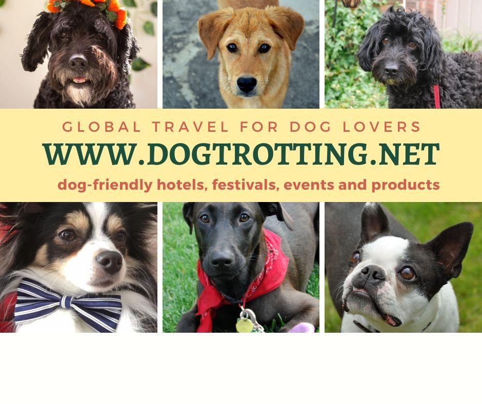 six dog images for dogtrotting.net header