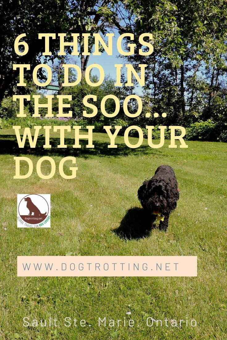 beautiful black dog in park with text: 6 things to do in the Soo... with your dog, Sault Ste. Marie, Ontario
