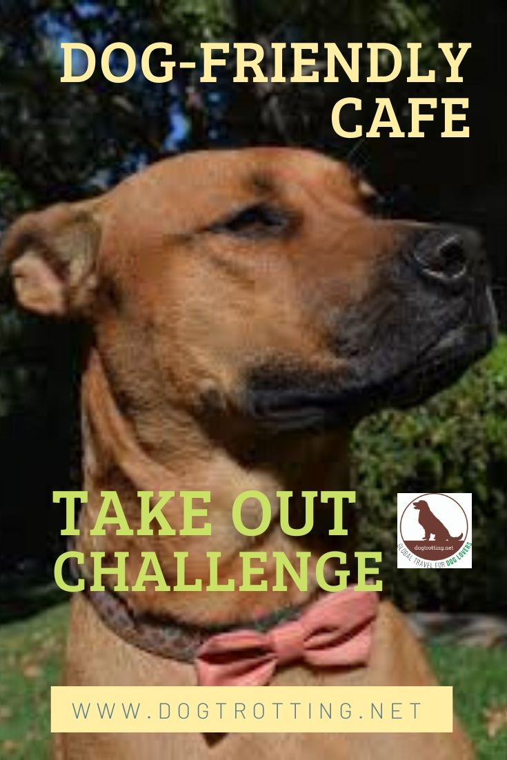 smiling brown dog with text: dog-friendly cafe take out challenge