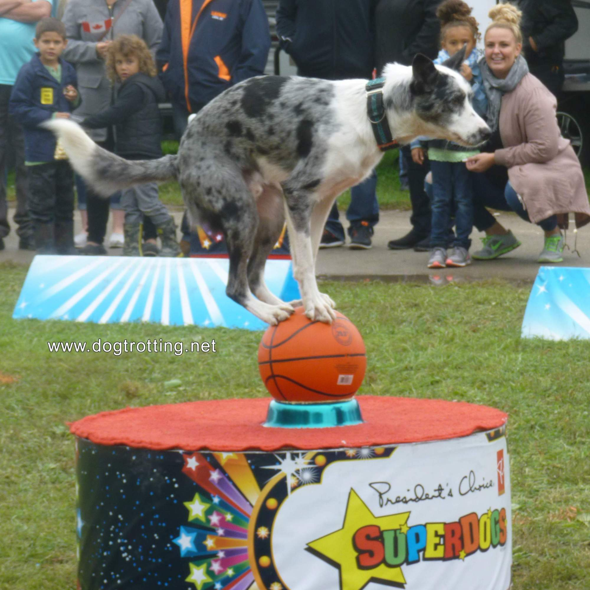 President's Choice SuperDogs dog balancing four paws on basket ball