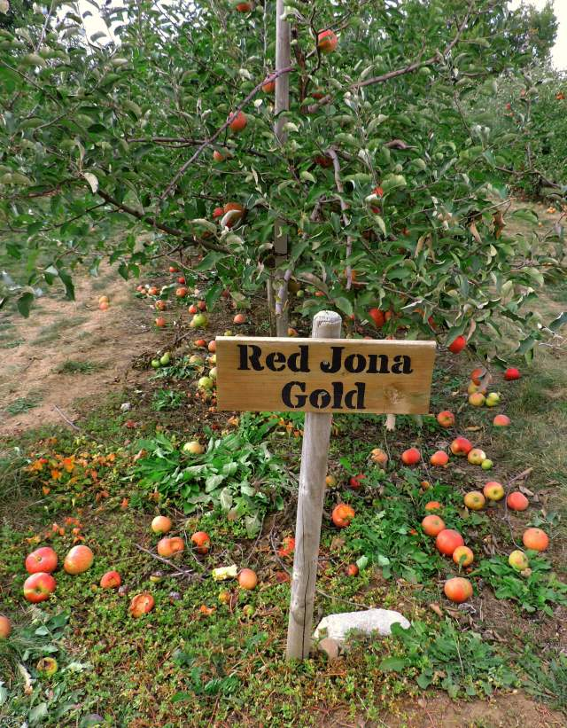 Red Jona Gold sign at dog friendly apple orchard