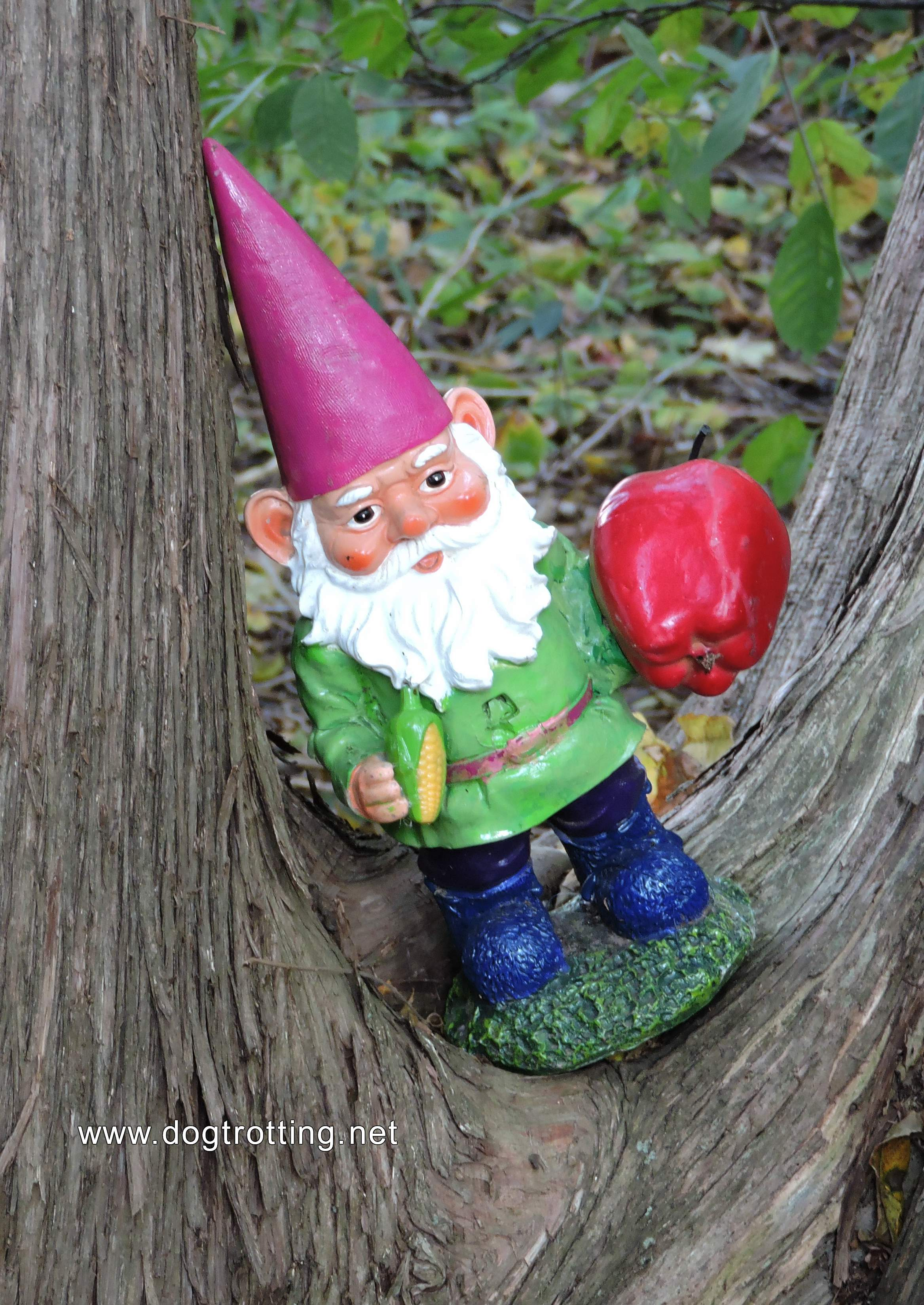 garden gnome in tree at The Apple Orchard