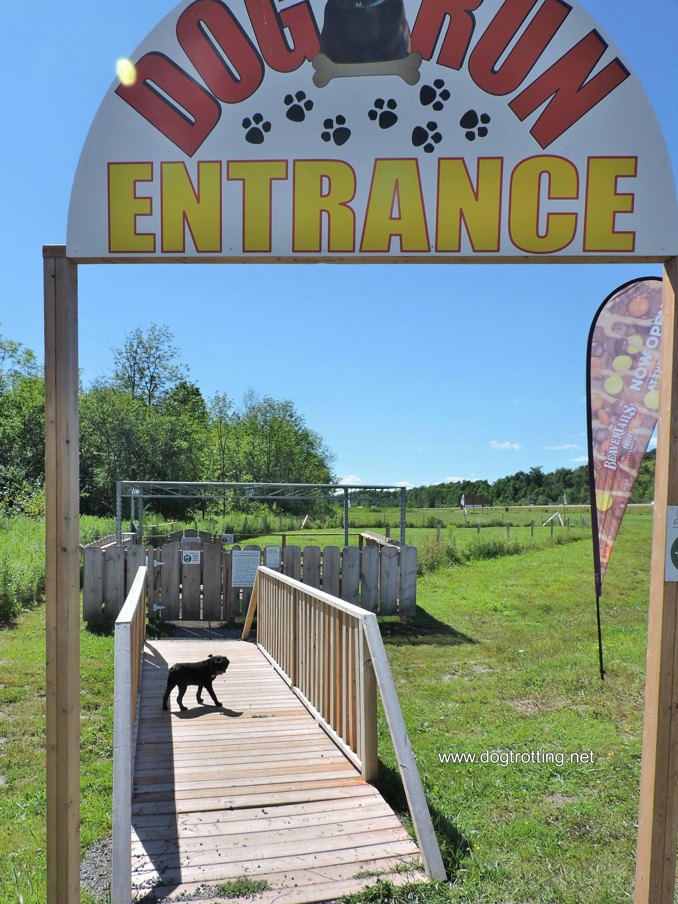 black dog at The Big Apple in Cobourne, Ontario